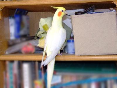 piro20091027-3.jpg