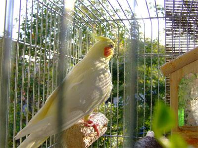 piro20091028-1.jpg