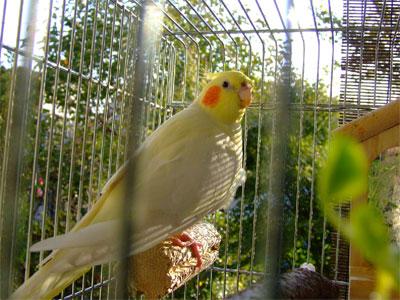piro20091028-2.jpg