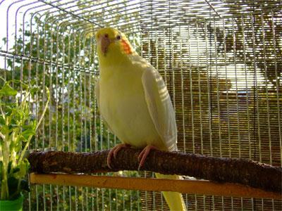 piro20091030-2.jpg