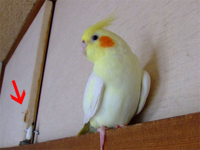 piro20091030-4.jpg