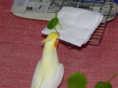 piro20091031-3.jpg