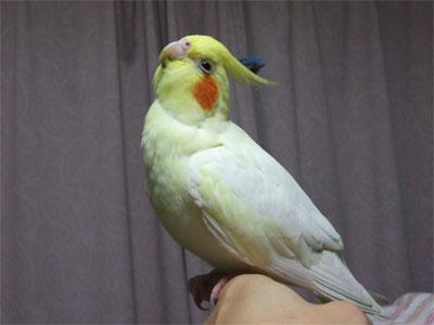 piro20091125-4.jpg