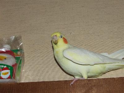 piro20091223-2.jpg