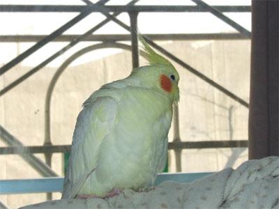 piro20091224-2.jpg