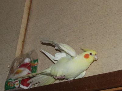 piro20091226-2.jpg