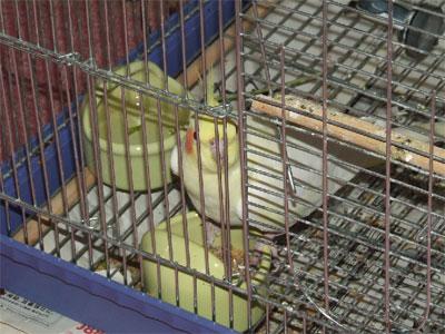piro20091230-1.jpg
