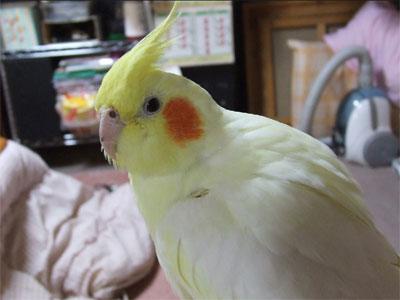 piro20091231-1.jpg