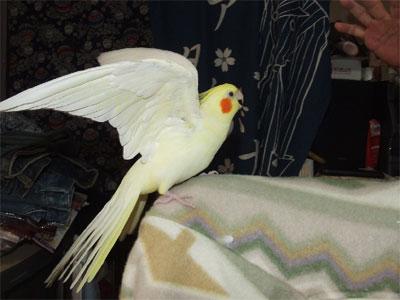 piro20100125-3.jpg