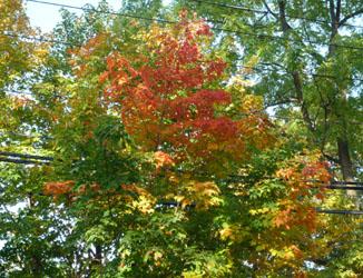 autumnleaves_091021_250