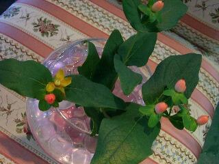 ヒペリカム花