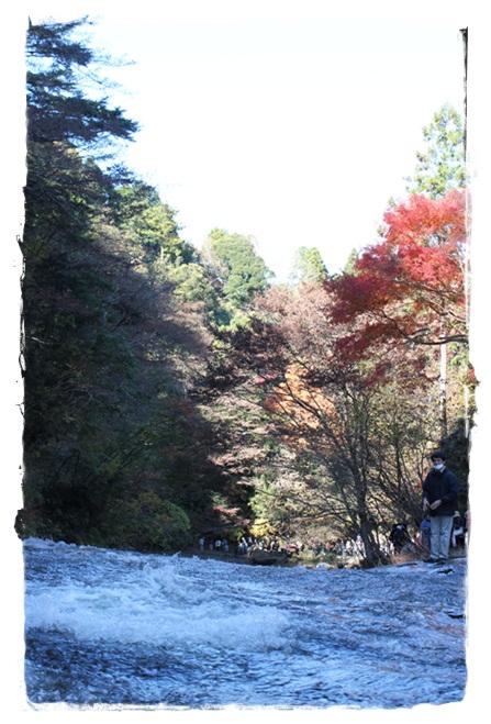 養老渓谷2011-4