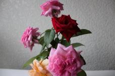 IMG_0009_6_20110826221945.jpg