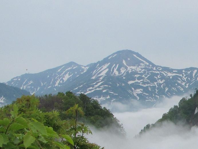 頚城駒からの焼山と火打(6月)