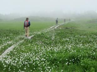 田代湿原を歩く