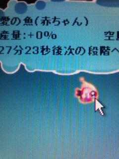 愛の魚赤ちゃん