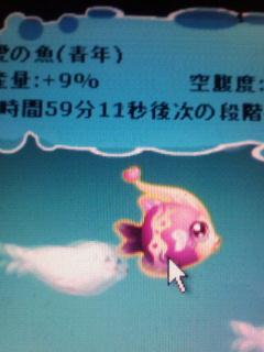 愛の魚青年
