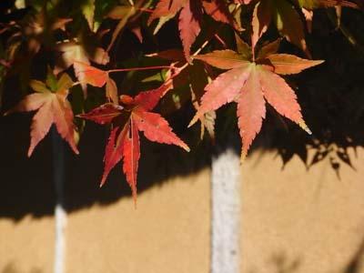 紅葉200906