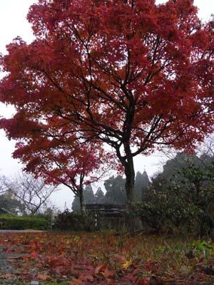 紅葉200911