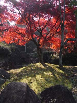 紅葉200916