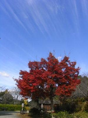 紅葉201004