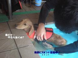 泳ぐ前・・