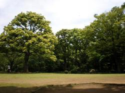 公園-10