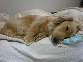 そして・・寝る