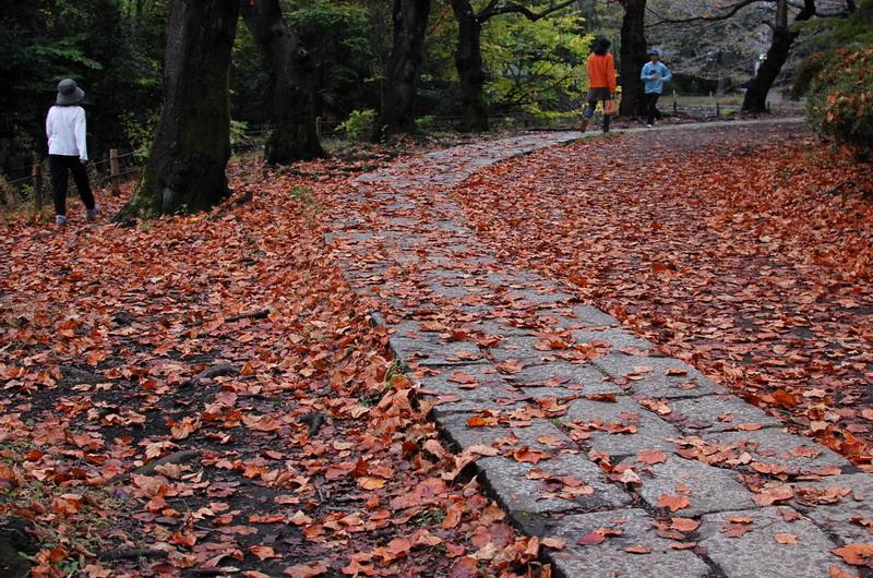 落ち葉遊歩道