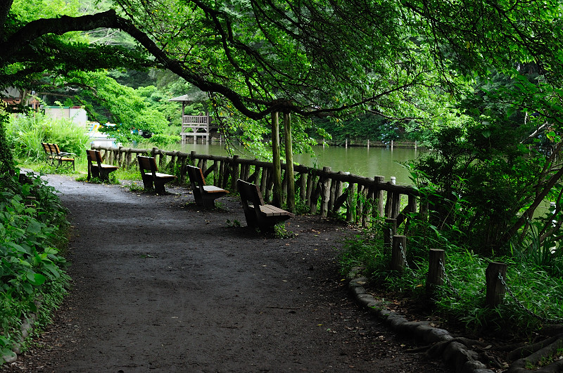 上池遊歩道2_