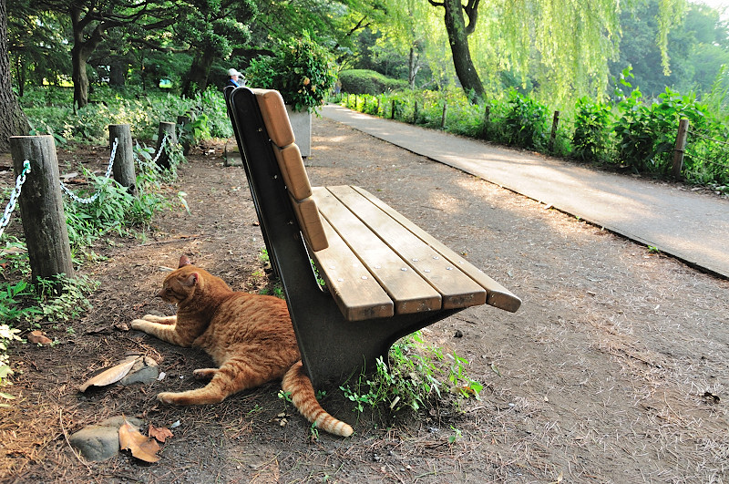 上池猫とベンチ_20110618_27