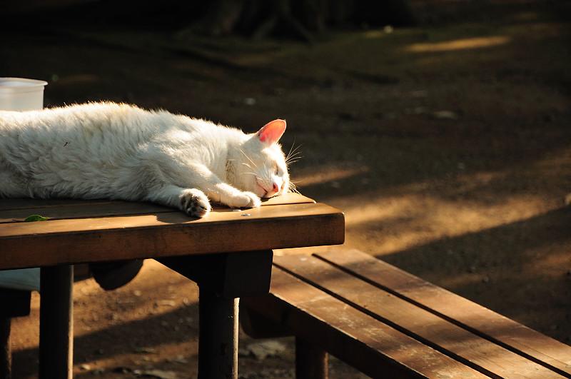 昼寝猫_20110618_29