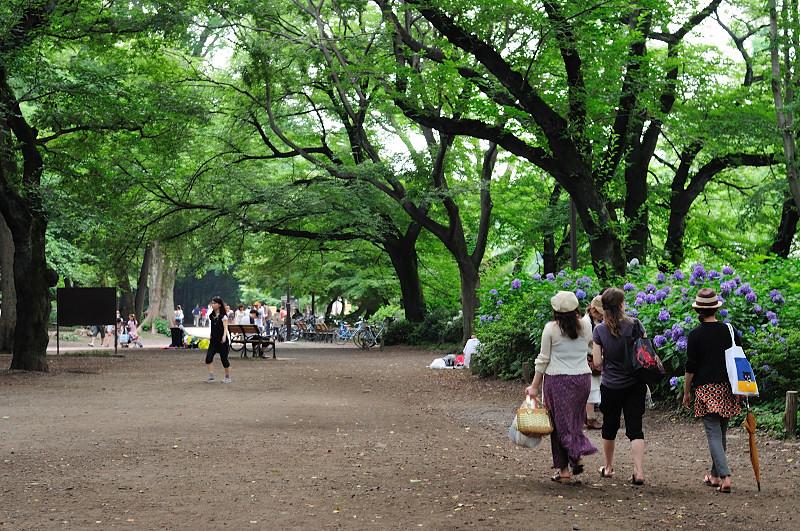 紫陽花と井の頭公園_20110618_52