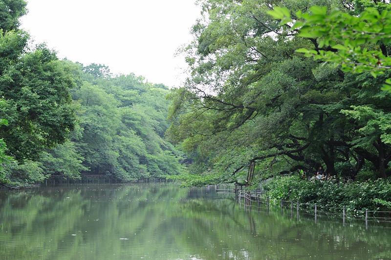 ひょうたん橋から_20110618_54