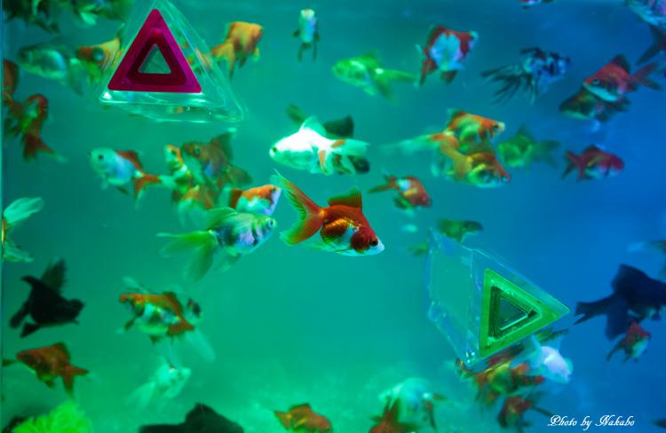 Aqua-12.jpg