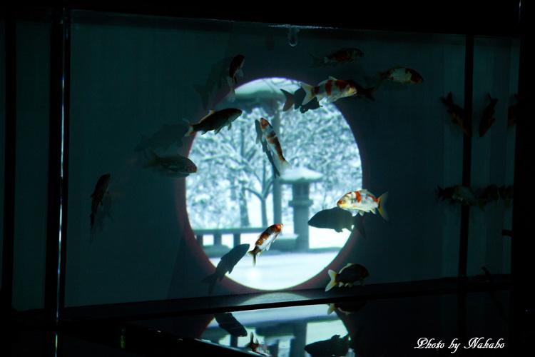 Aqua-18.jpg