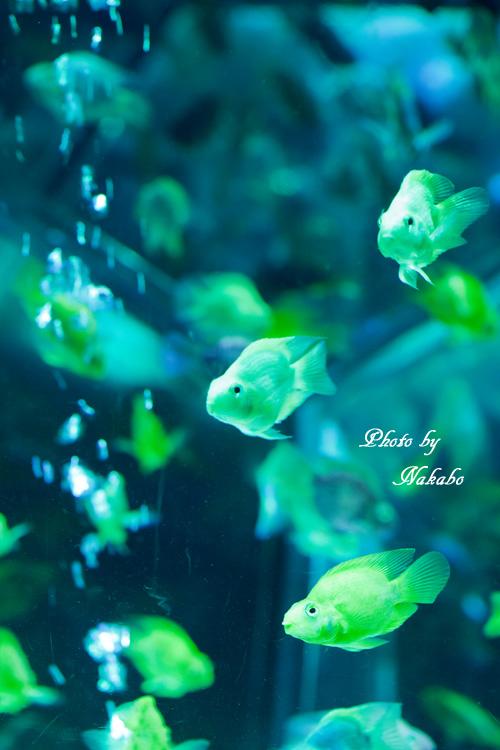 Aqua-36.jpg