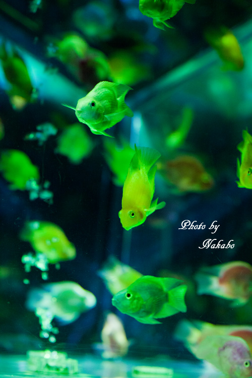 Aqua-37.jpg