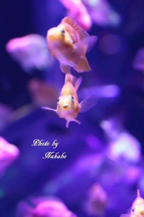 Aqua-38.jpg