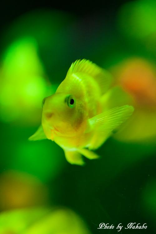 Aqua-40.jpg