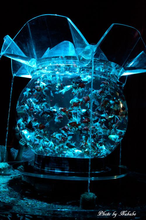 Aqua-7.jpg