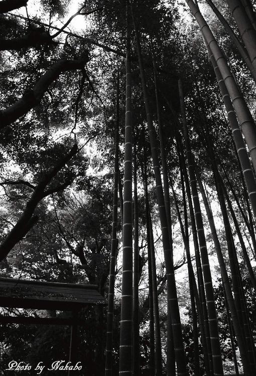 Kamakura_mono_20.jpg