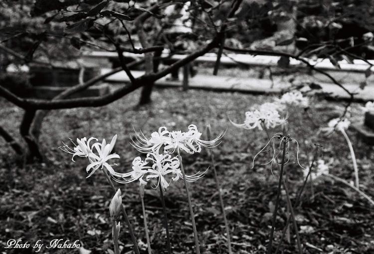 Kamakura_mono_21.jpg