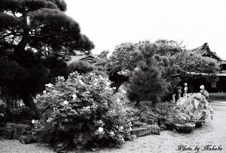 Kamakura_mono_6.jpg
