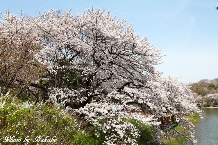 Mitsuike4.jpg