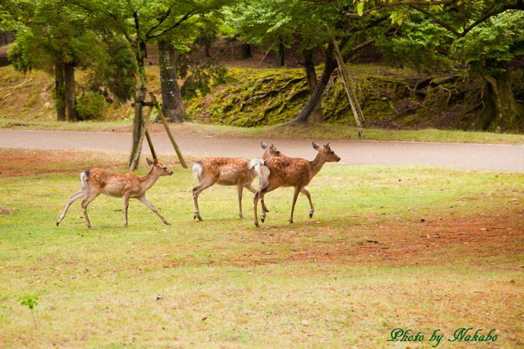 Nara15.jpg
