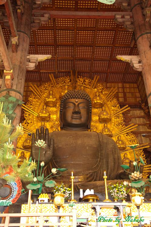 Nara18.jpg