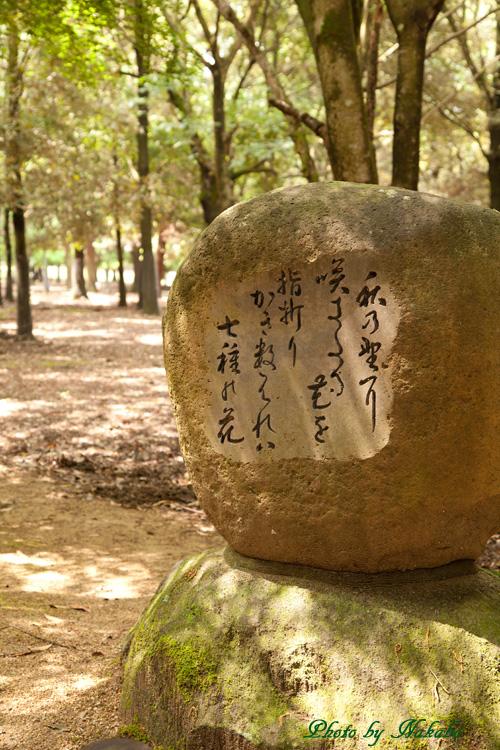 Nara32.jpg