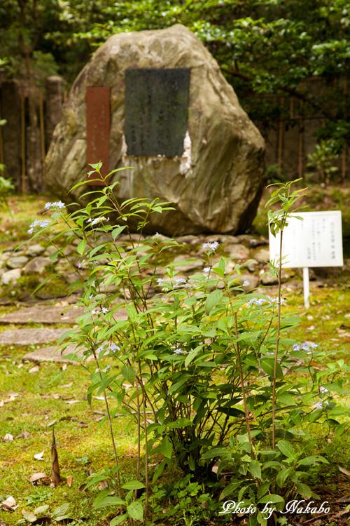 Nara36.jpg