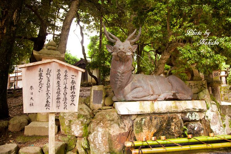 Nara49.jpg